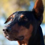 Rufus (aka Bear)