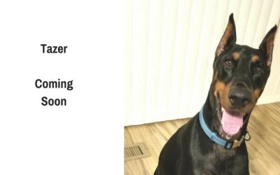 Tazer – Coming Soon!
