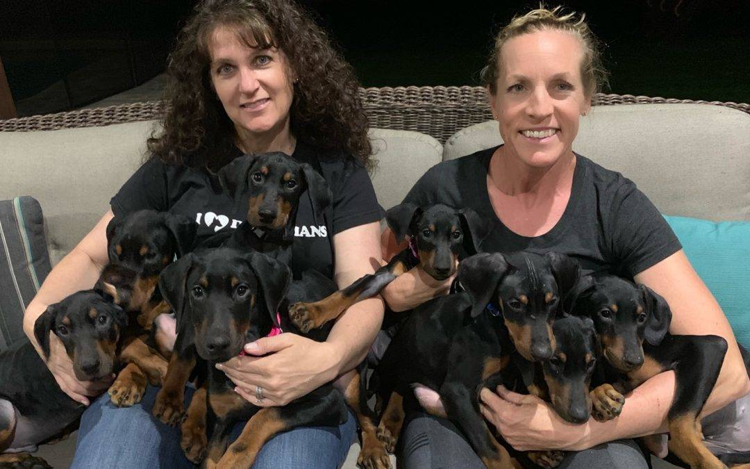 The Sunday Litter Puppies — Coming Soon!
